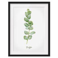 Afbeelding Aquarel  Eucalyptus I