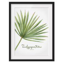 Afbeelding Aquarel Trachycarpus I