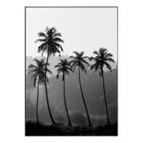 Bild Palmen
