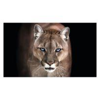 Bild Puma