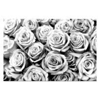 Bild Creamy Roses
