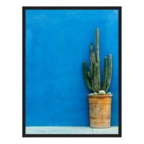 Bild Blue Wall with Cactus