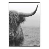 Bild Highlander