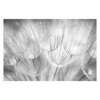 Vliestapete Pusteblumen Schwarzweiß