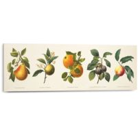 Afbeelding Vruchten