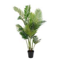 Palmier déco Areca