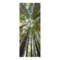 Glasbild Mammutbaum Baumkronen