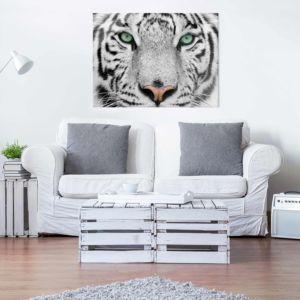 Bild Weisser Tiger