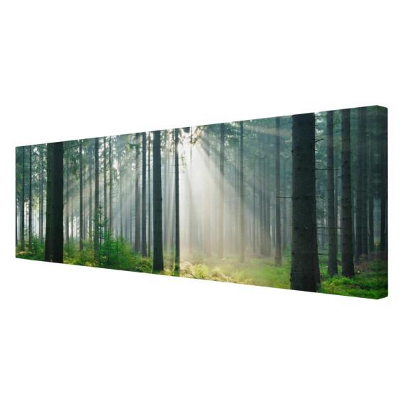 LeinwandMassivholz 30 Bild Forest Cm FichteMehrfarbig Enlightened X 90 wP8n0XOk