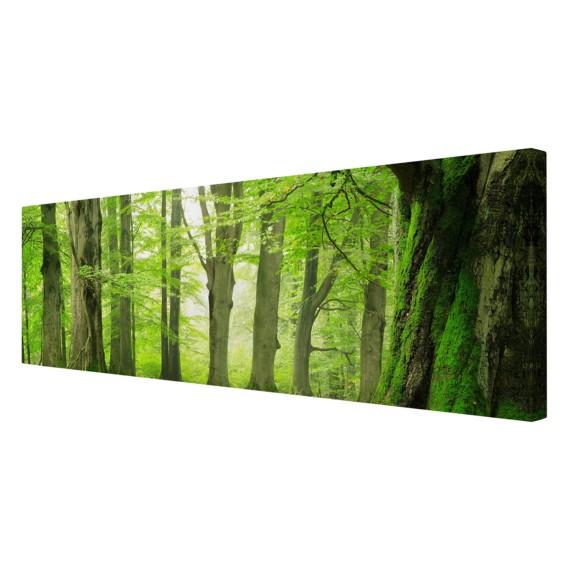 30 FichteMehrfarbig 90 Mighty Bild LeinwandMassivholz Trees X Beech Cm XZuTOPwkil