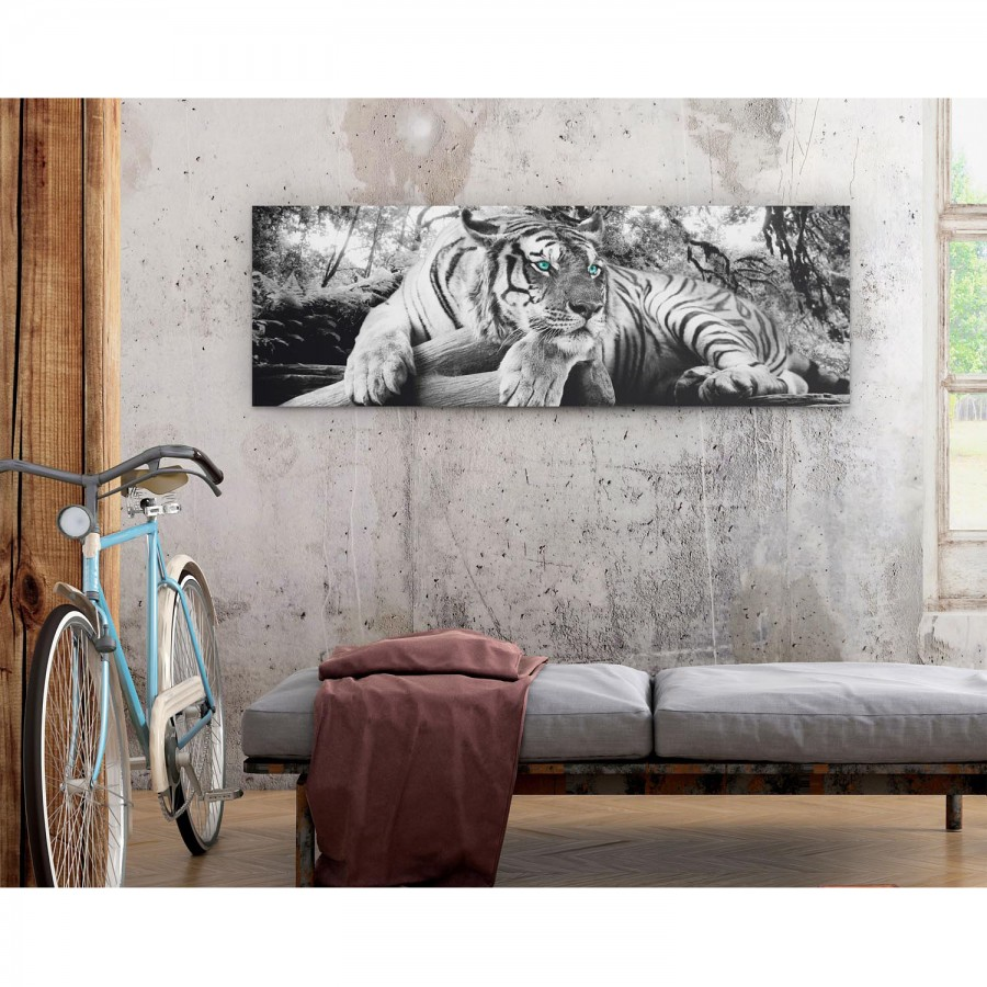 Tigerblick I Bild I Tigerblick Bild Bild 45ARLj