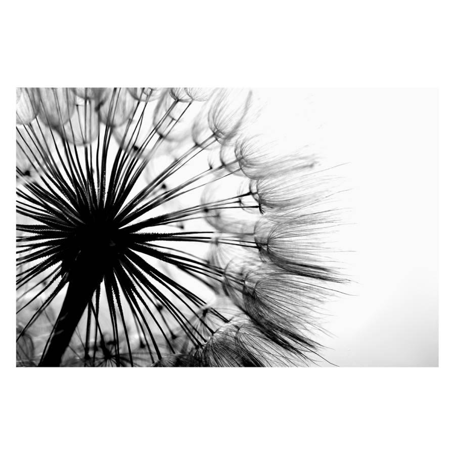 Big Dandelion Dandelion Bild Big Bild Bild bgf76y