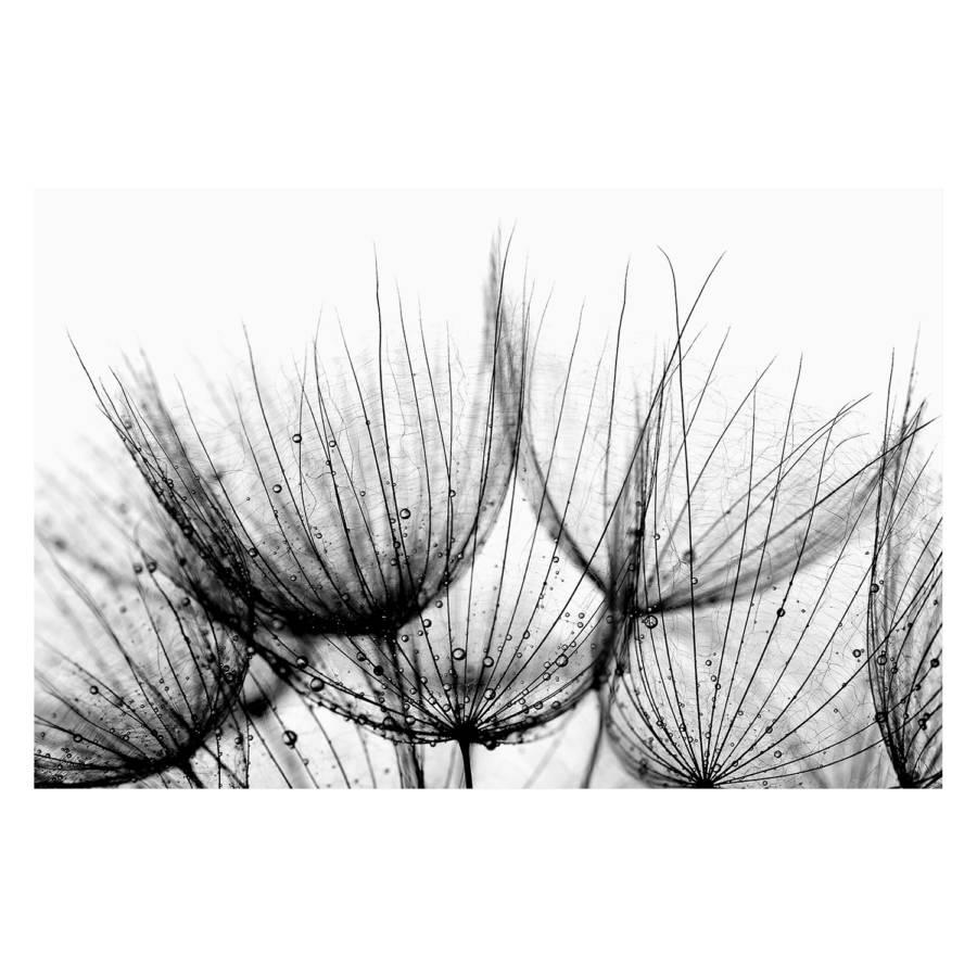 Bild Of Dandelion Detail Of Bild Dandelion Bild Detail kiPXuZ