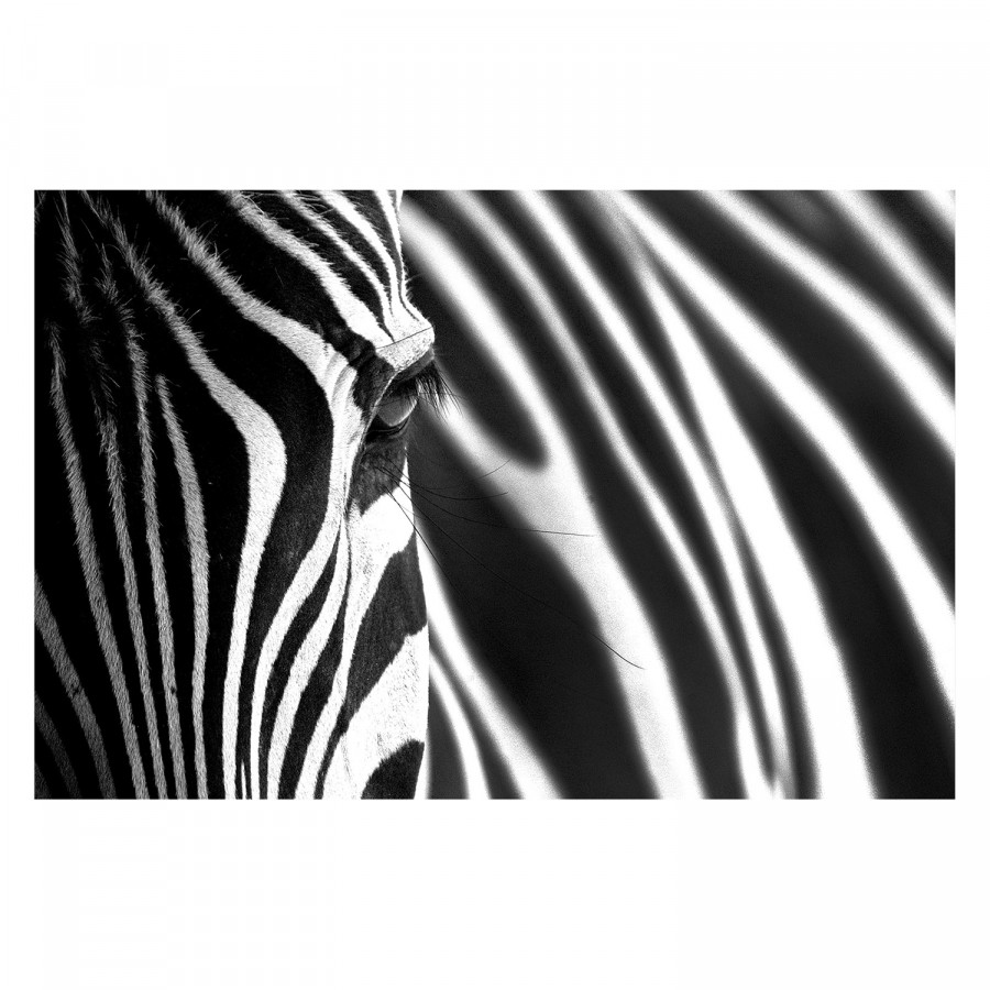 Bild Bild Animal Animal Bild Stripes Animal Stripes Stripes Stripes Bild Animal Bild Animal Stripes xCBordeWQ
