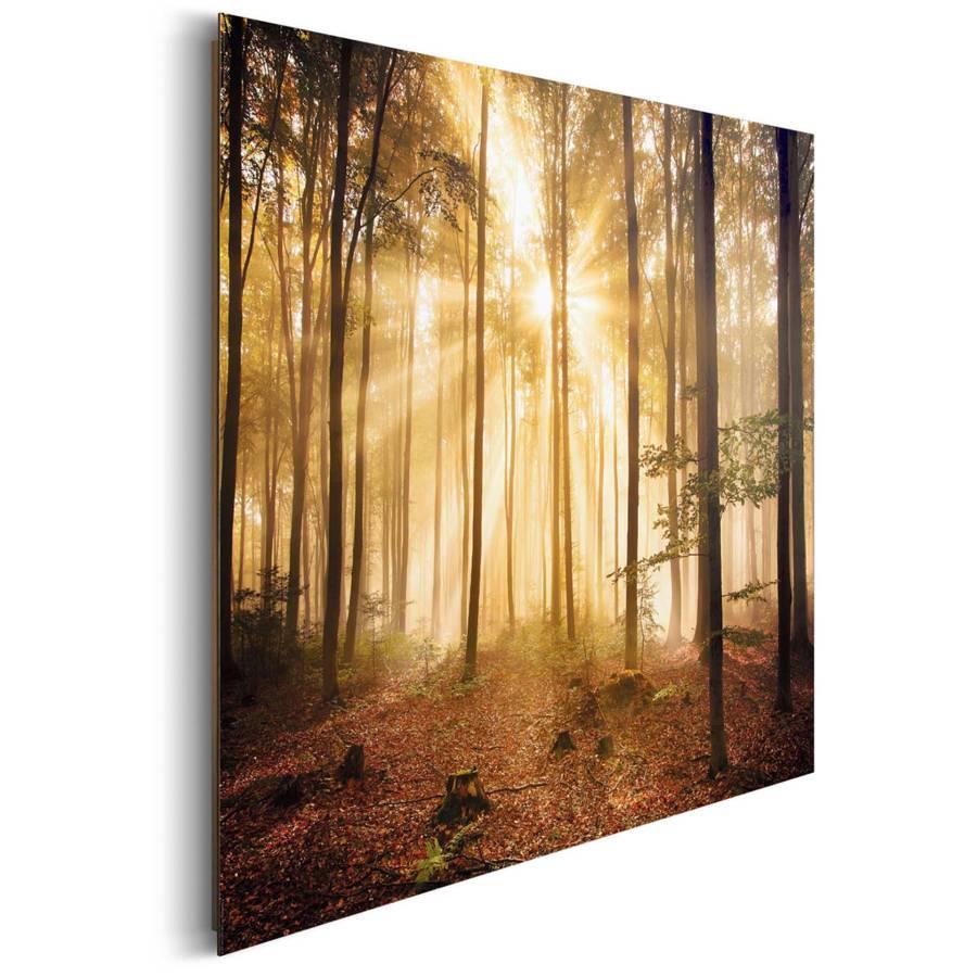 Bild Erleuchteter Wald Erleuchteter Bild Bild Bild Bild Wald Erleuchteter Wald Wald Erleuchteter Erleuchteter sdxBtrohQC