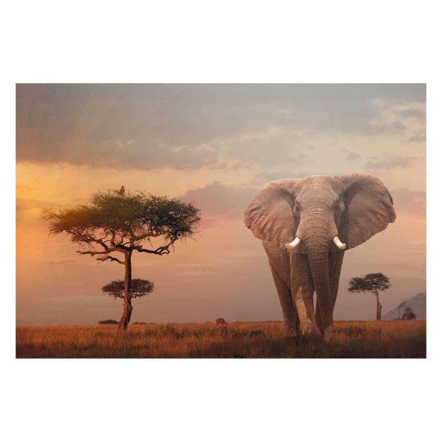 Bild Afrikas Bild Wildtiere Afrikas Wildtiere Bild Afrikas hdCstQr