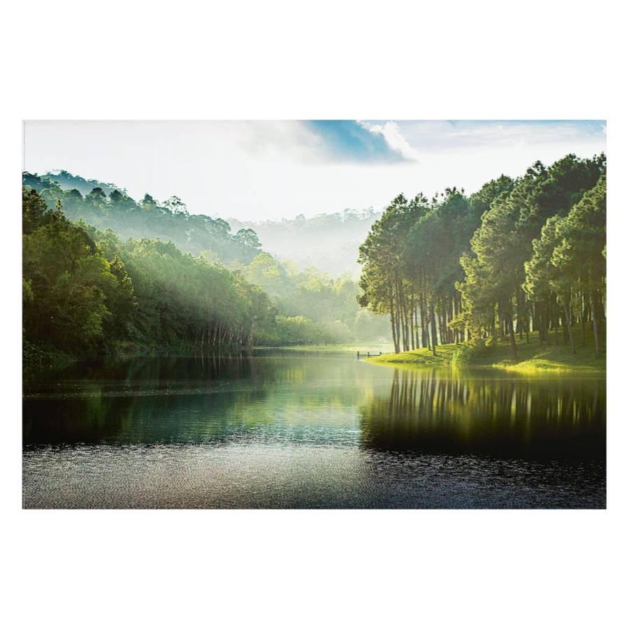 Wald Wald Mystischer Wald Mystischer Bild Mystischer Bild Bild Bild 0OPk8nw