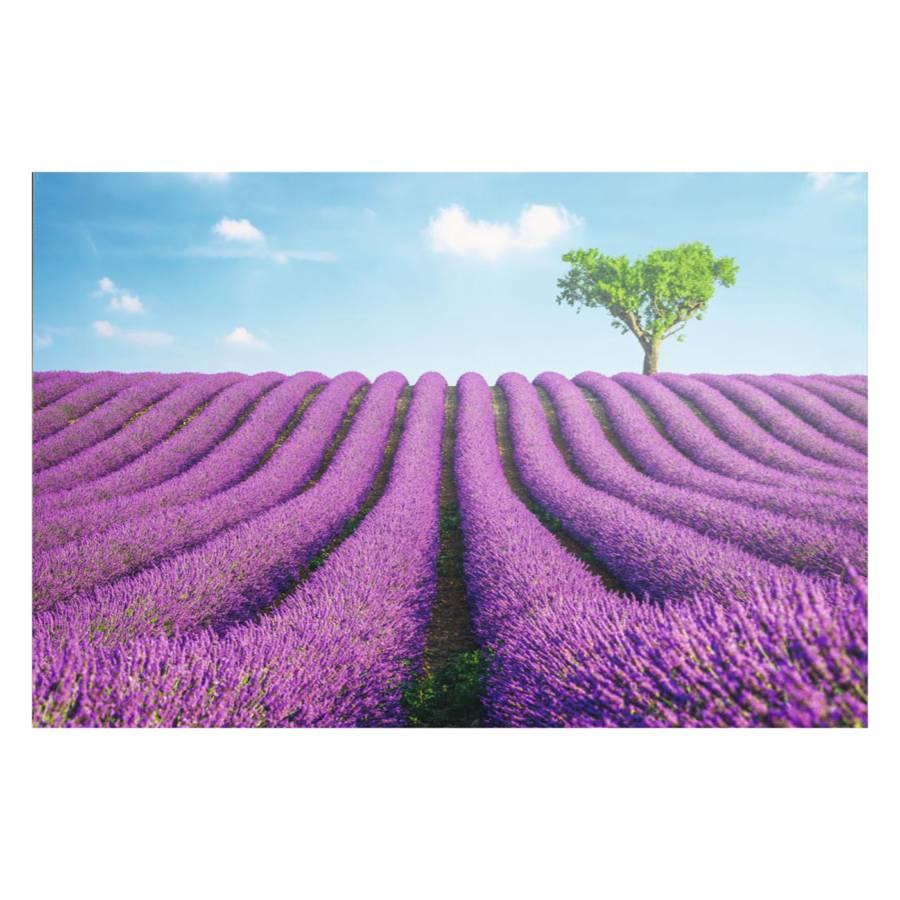 Lavendel Lavendel Bild Felder Lavendel Felder Felder Felder Felder Bild Lavendel Bild Lavendel Bild Bild QtsrhxdC