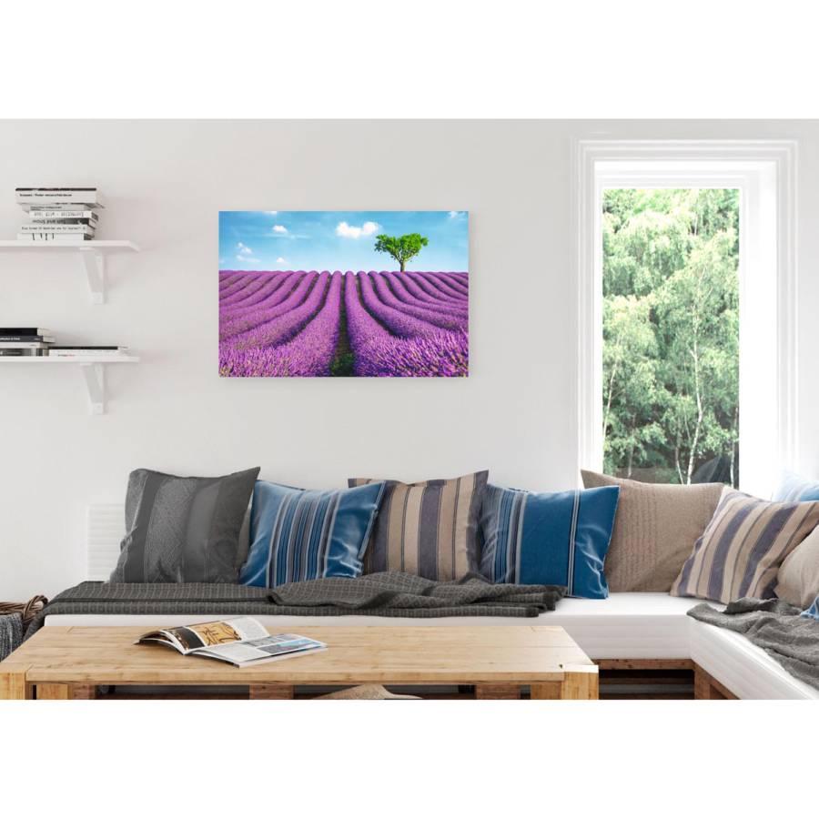 Felder Felder Felder Lavendel Lavendel Bild Bild Lavendel Bild orxeCWdB