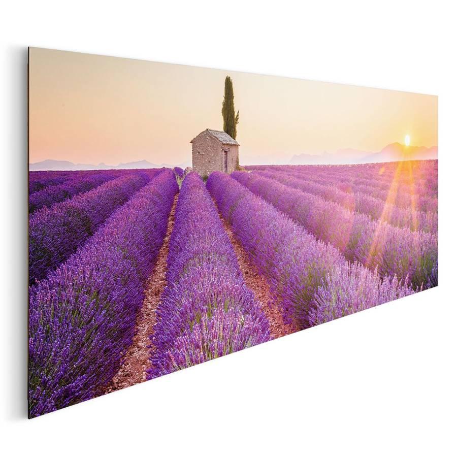 Bild Horizont Lavendel Lavendel Bild Horizont Lavendel Bild Sc5q3A4RjL