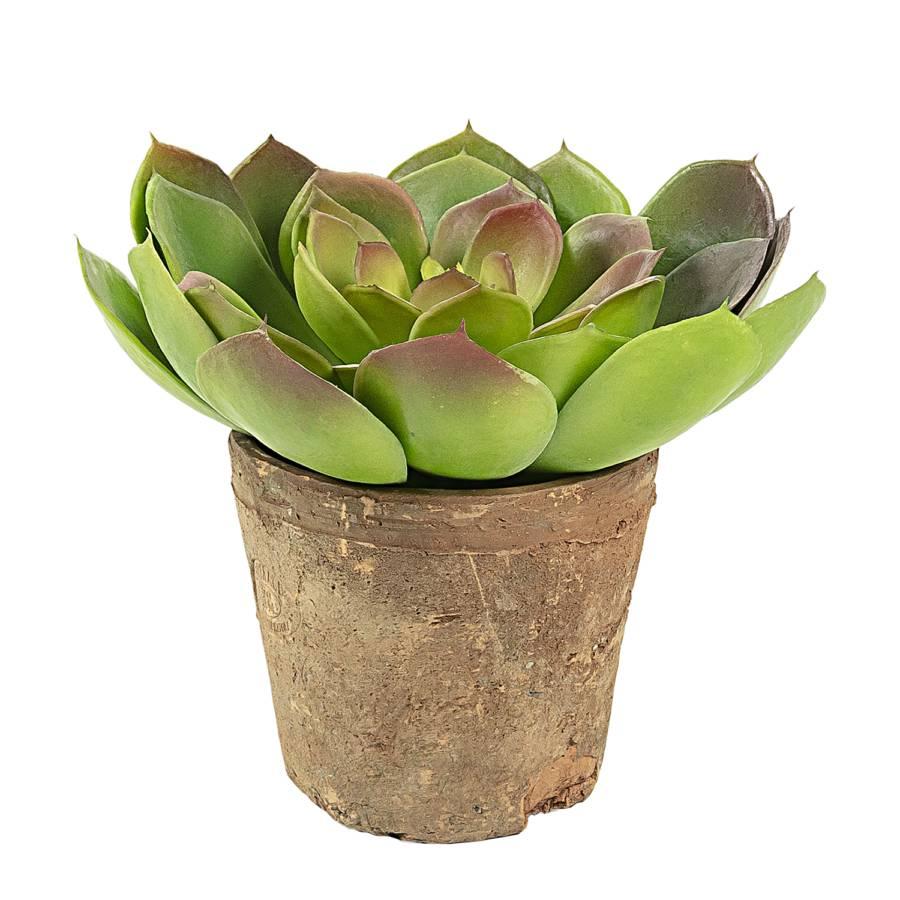 Terra KunststoffKeramikGrün Kunstpflanze Kunstpflanze Terra Diest KunststoffKeramikGrün Diest Diest Kunstpflanze YbgI6m7yfv