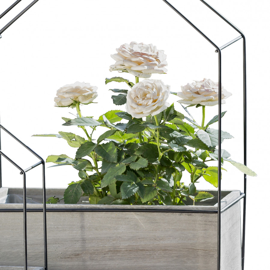 Fleurs Bacs À ÉlémentsPaulownia Haus2 ImpérialArgentéBlanc EDHW2I9Y