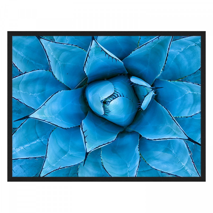 Blue Hêtre MassifPlexiglas82 Déco X 62 Cm Tableau Agave UzpqMSGV
