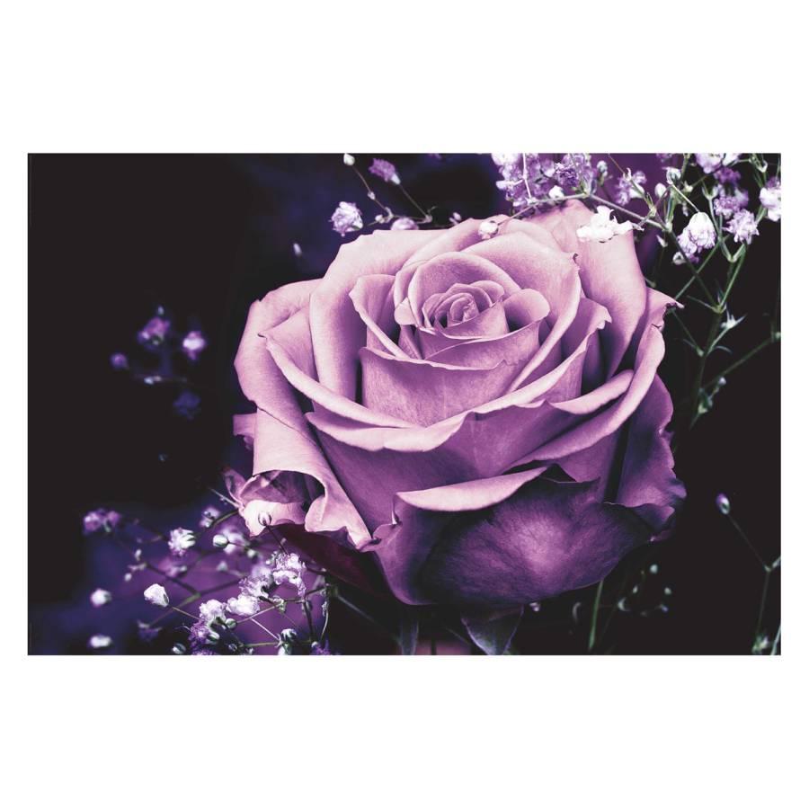 Pretty Pretty PapierMdfLila Bild PapierMdfLila Rose Pretty Rose Bild Bild tdshBQCorx