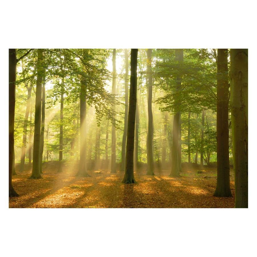 Bild PapierMdfGrün Lichterwald Lichterwald Bild Lichterwald PapierMdfGrün Bild ALcR4S53jq