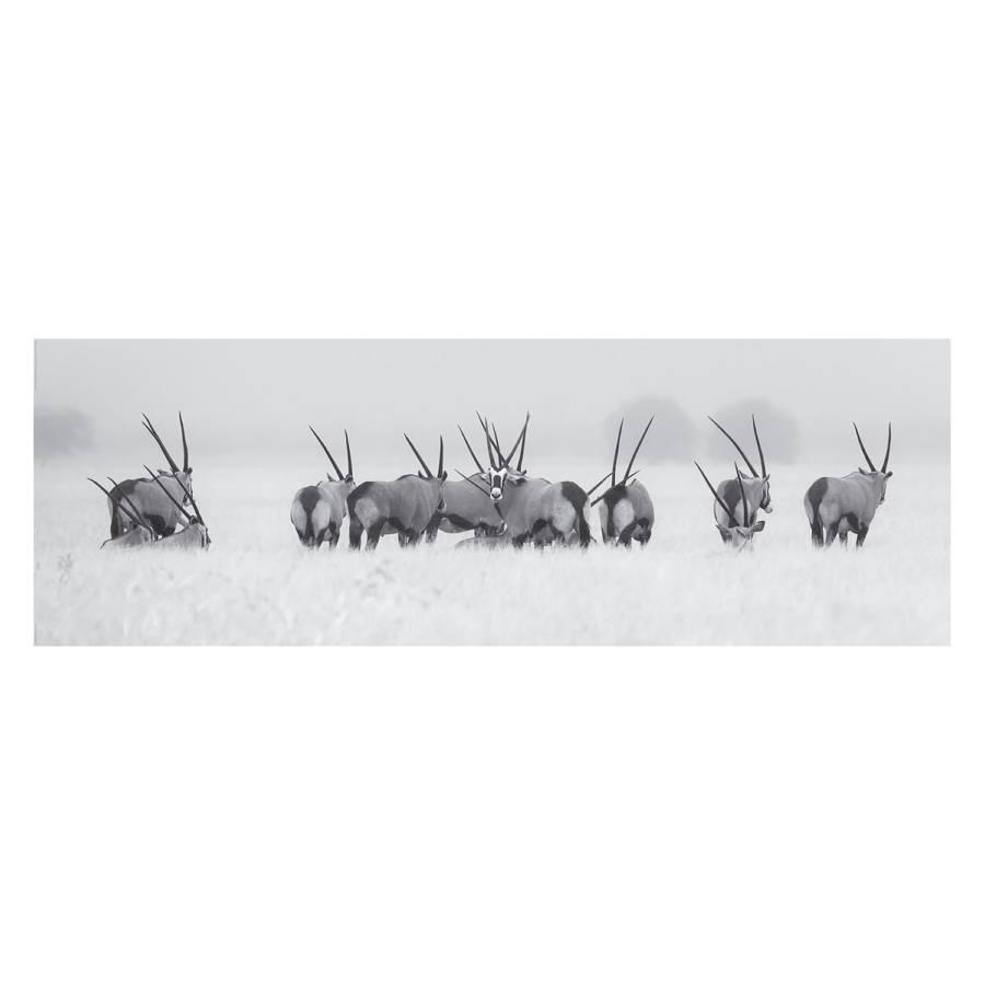 Bild Bild Bild Antilopen Antilopen PapierMdfWeiß Antilopen PapierMdfWeiß Bild PapierMdfWeiß Antilopen Antilopen PapierMdfWeiß PapierMdfWeiß Bild Bild w08nOkXP