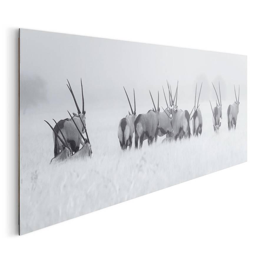 Antilopen PapierMdfWeiß Bild Antilopen Antilopen Bild Bild PapierMdfWeiß 0ZnOXN8wPk