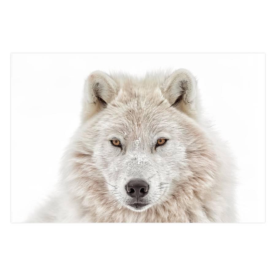 Tableau Déco Déco Wolf Wolf PapierMdfBlanc Tableau CWrBdxoe