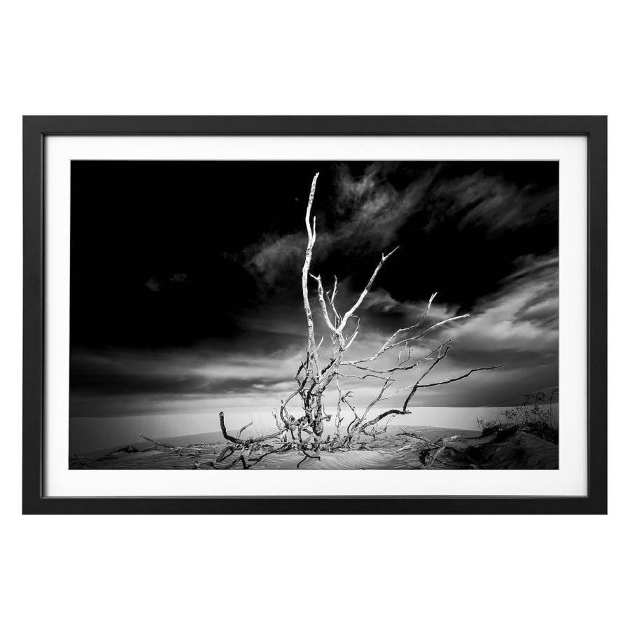 Bild Massivholz Dry Dry Bild Tree Tree LindeSchwarzWeiß ED2H9I