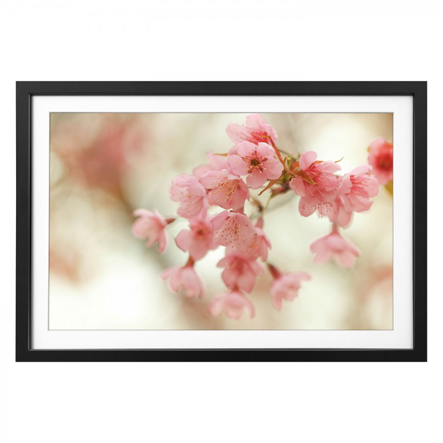 Cherry Massivholz Bild Blossoms Bild LindeMehrfarbig LindeMehrfarbig Bild Blossoms Cherry Massivholz QBorsdCxth