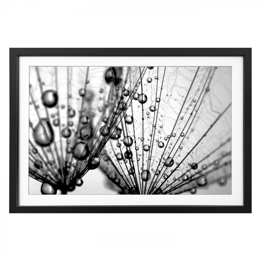 Dandelion LindeSchwarzWeiß Seeds LindeSchwarzWeiß Bild Massivholz Dandelion Bild Seeds Dandelion Bild Massivholz qVzpUGSM