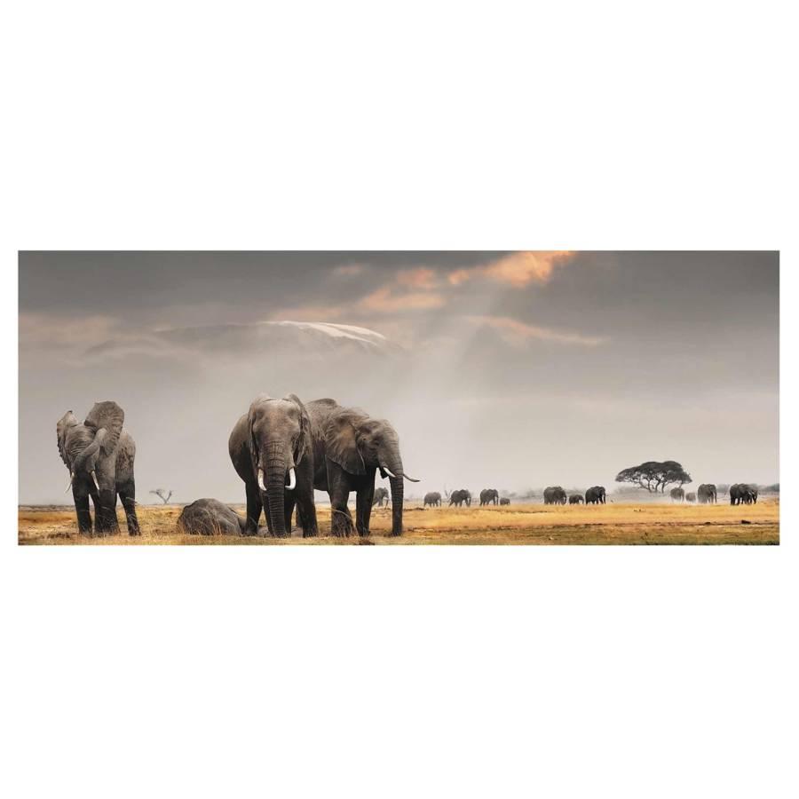Tableau RésistantMulticolore Déco X Verre Savane 30 Éléphants La Dans Cm 80 Véritable nw80vmN