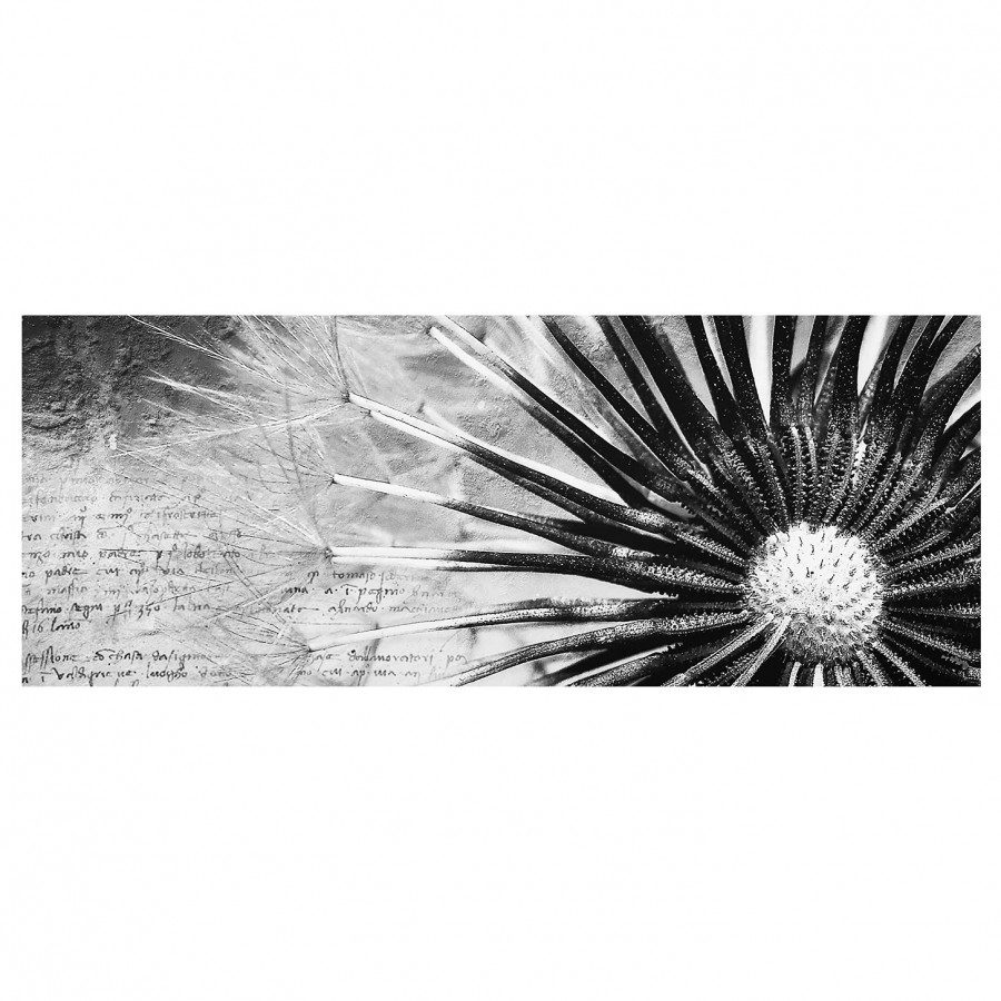 Bild Pusteblume Schwarz & Weiß