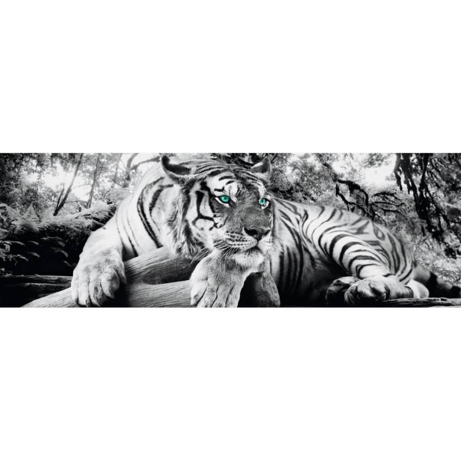 Bild I Tigerblick Bild Tigerblick Bild I 3RAL5j4