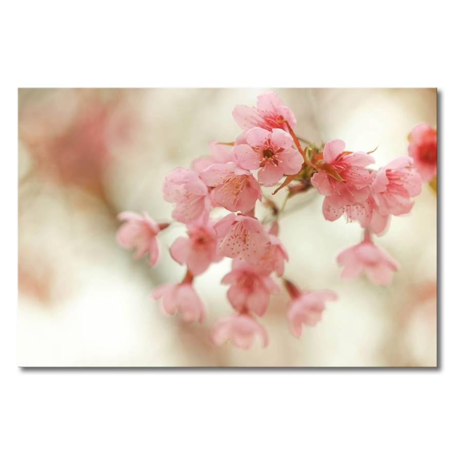 Blossoms LeinwandBeigePink LeinwandBeigePink Cherry Blossoms LeinwandBeigePink Blossoms Cherry Leinwandbild Leinwandbild Leinwandbild Cherry eWHbDY29EI