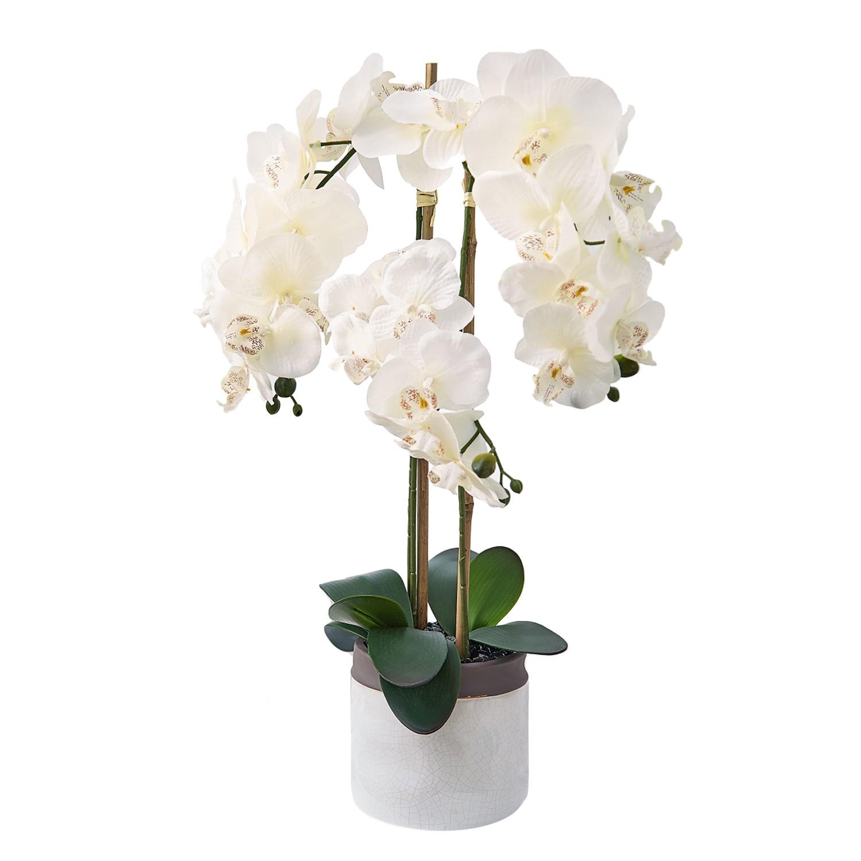 home24 Kunstpflanze Orchidee | Dekoration > Dekopflanzen | Weiss | twentyfour