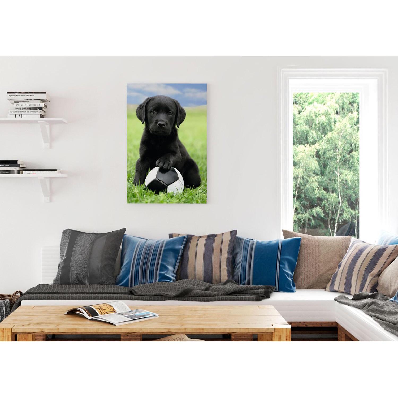 Bild Labrador Welpe, Reinders