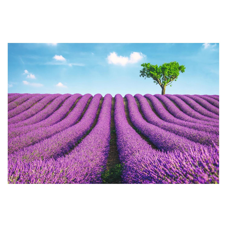 home24 Bild Lavendel Felder | Dekoration > Bilder und Rahmen | Lila | Holzwerkstoff - Papier | Reinders