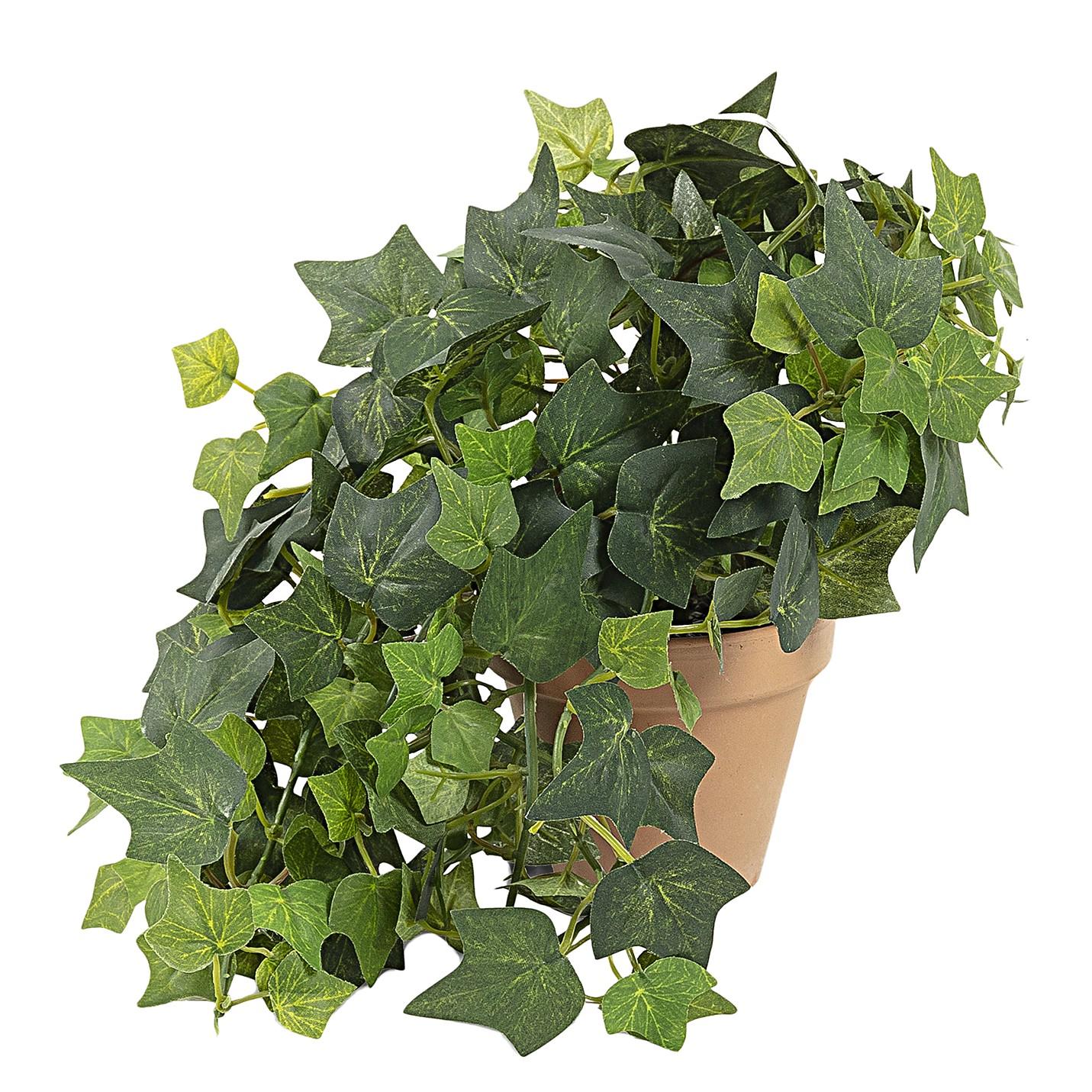 home24 Kunstpflanze Cooloola   Dekoration > Dekopflanzen > Kunstpflanzen   twentyfour