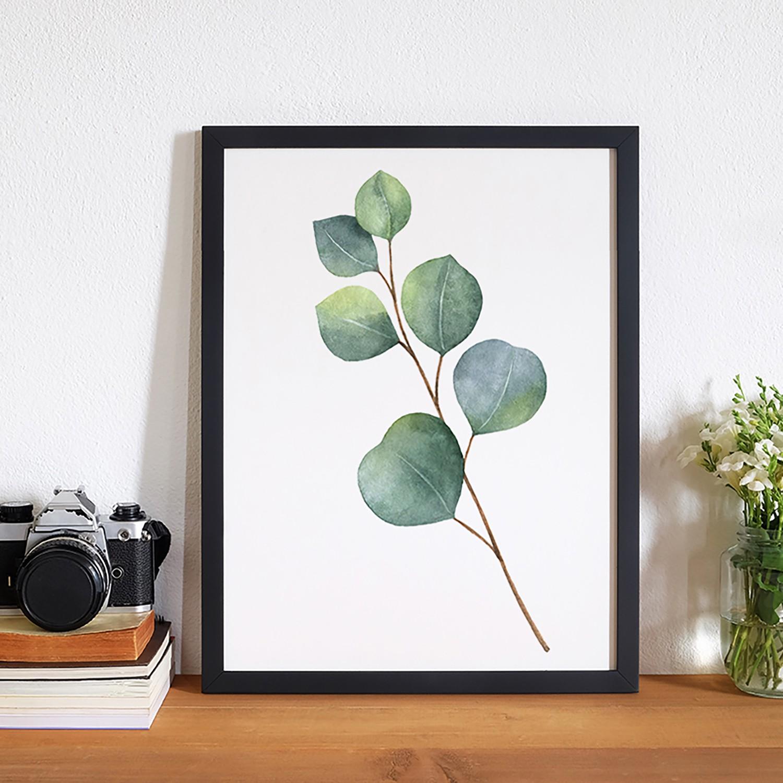 Bild Eucalyptus