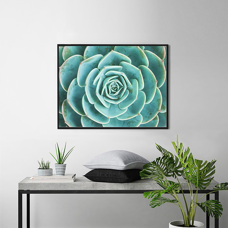 Bild Arrangement of the Succulents, Any Image