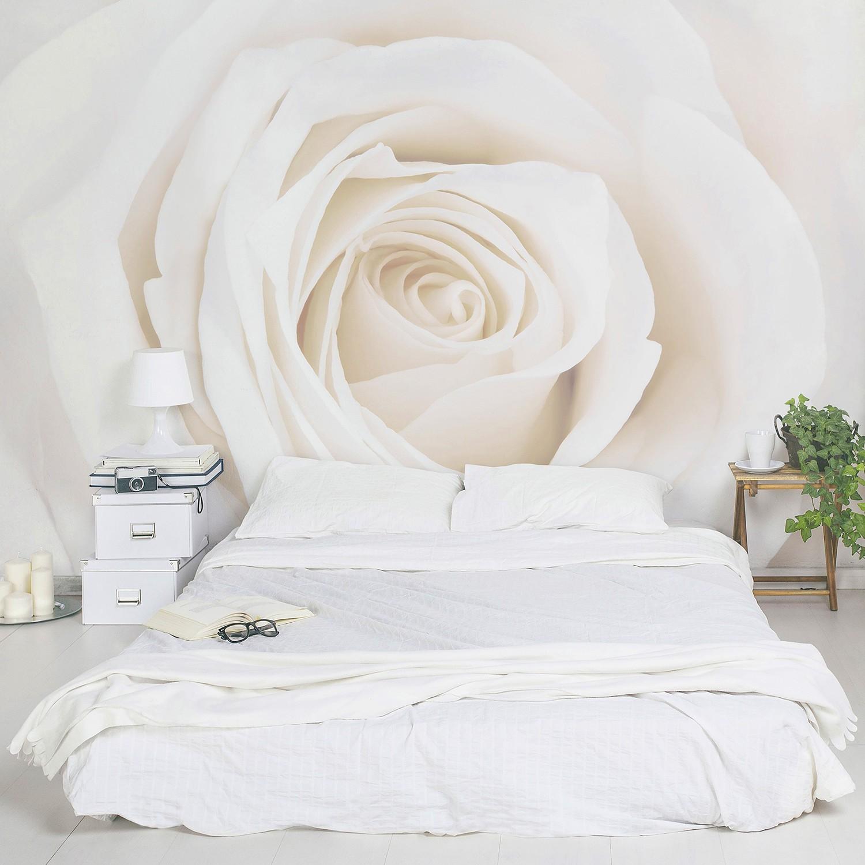 Vliestapete Pretty White Rose, Bilderwelten