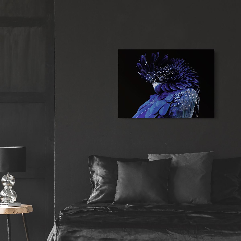 Glazen Afbeelding Blauwe Papegaai