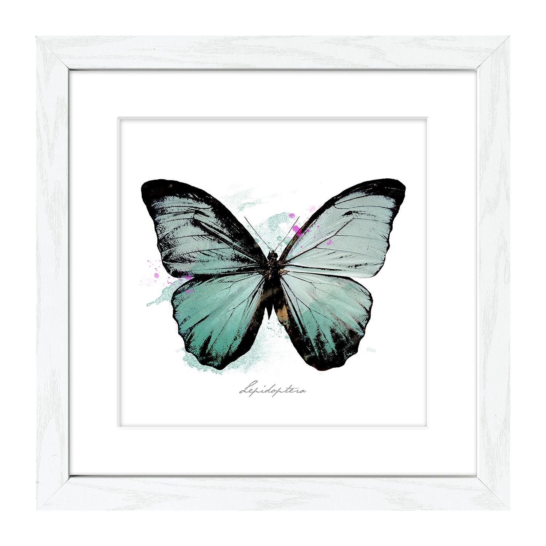 Bild Butterfly