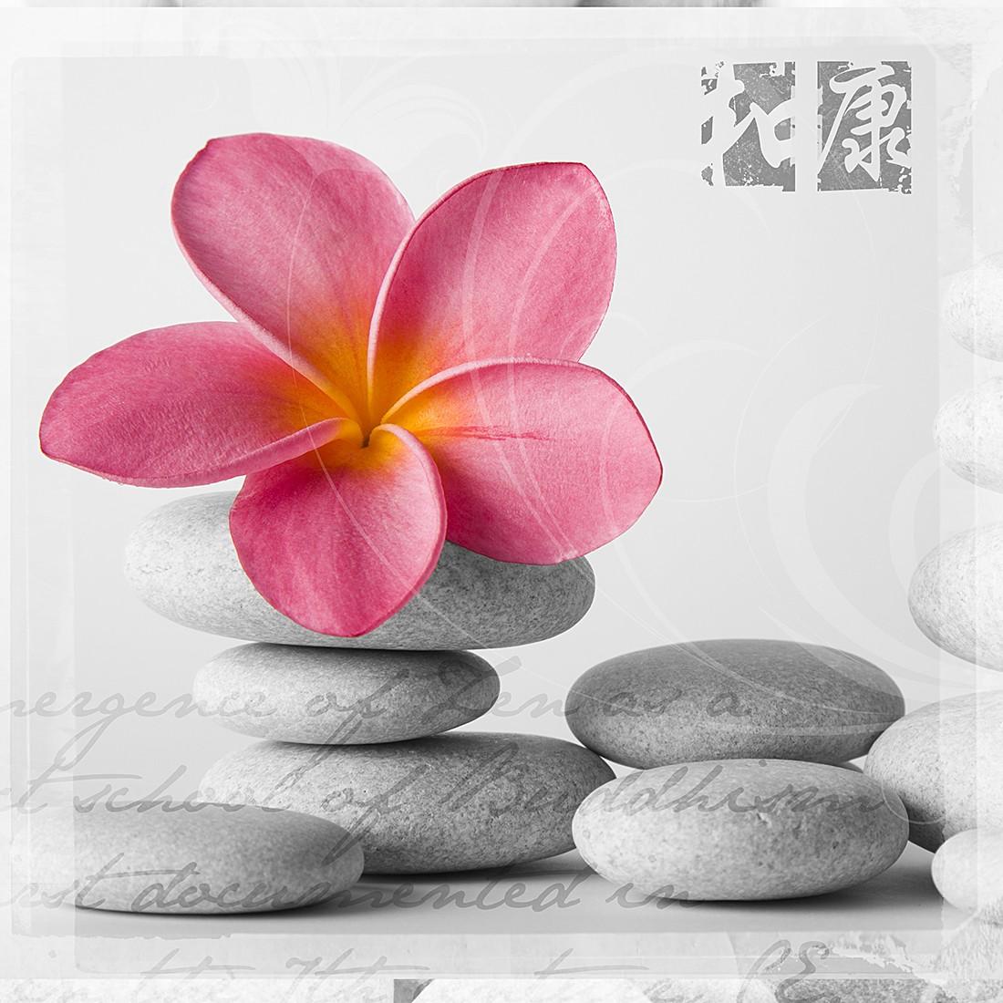 Print achter glas Frangipani Pink II 50x50, Pro Art
