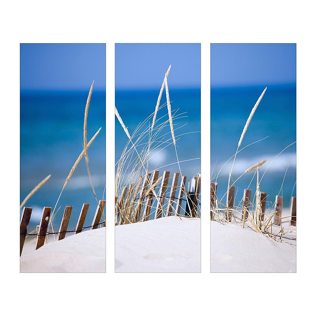 Kunstdruck Sand sedge (3-teilig)
